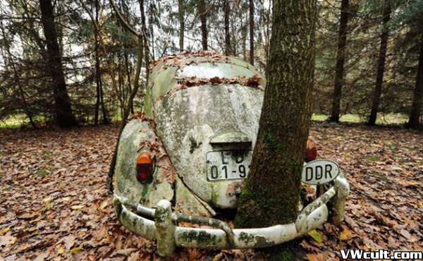 VW Beetle and tree